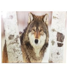 12 Units of Snow Wolf Canvas Picture - Wall Decor