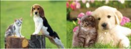 10 Units of 3d Picture 9709--Puppies & Kitties - Picture Frames