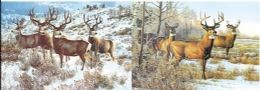 10 Units of 3d Picture 9714--Snowy Bucks - Picture Frames