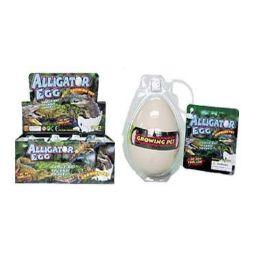 48 Units of Grow Alligator Hatching Egg - Magic & Joke Toys