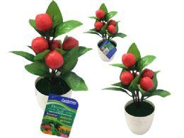 72 of 5 Head Apples In Flower Pot