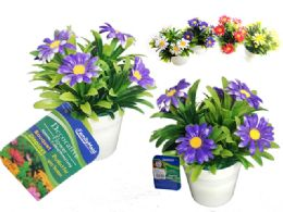 72 of 6 Head Daisies In Flower Pot