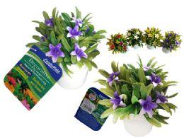 72 of 6 Head Lilies In Flower Pot