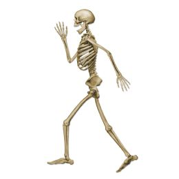 12 Bulk Profile Pete Jointed Skeleton Prtd 2 Sides